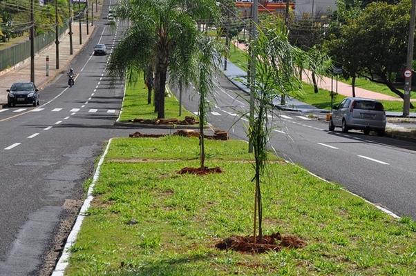 SAEV FAZ PLANTIO DE MUDAS NA AVENIDA DO ASSARY