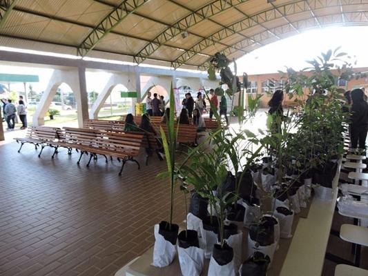 Votuporanga promove feira da troca de mudas