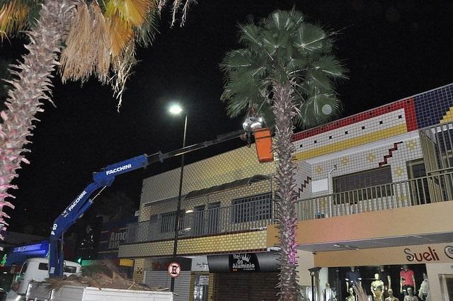 Prefeitura poda palmeiras da rua Amazonas